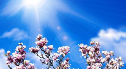 Kuidas parandada õhukvaliteeti ja tervist?